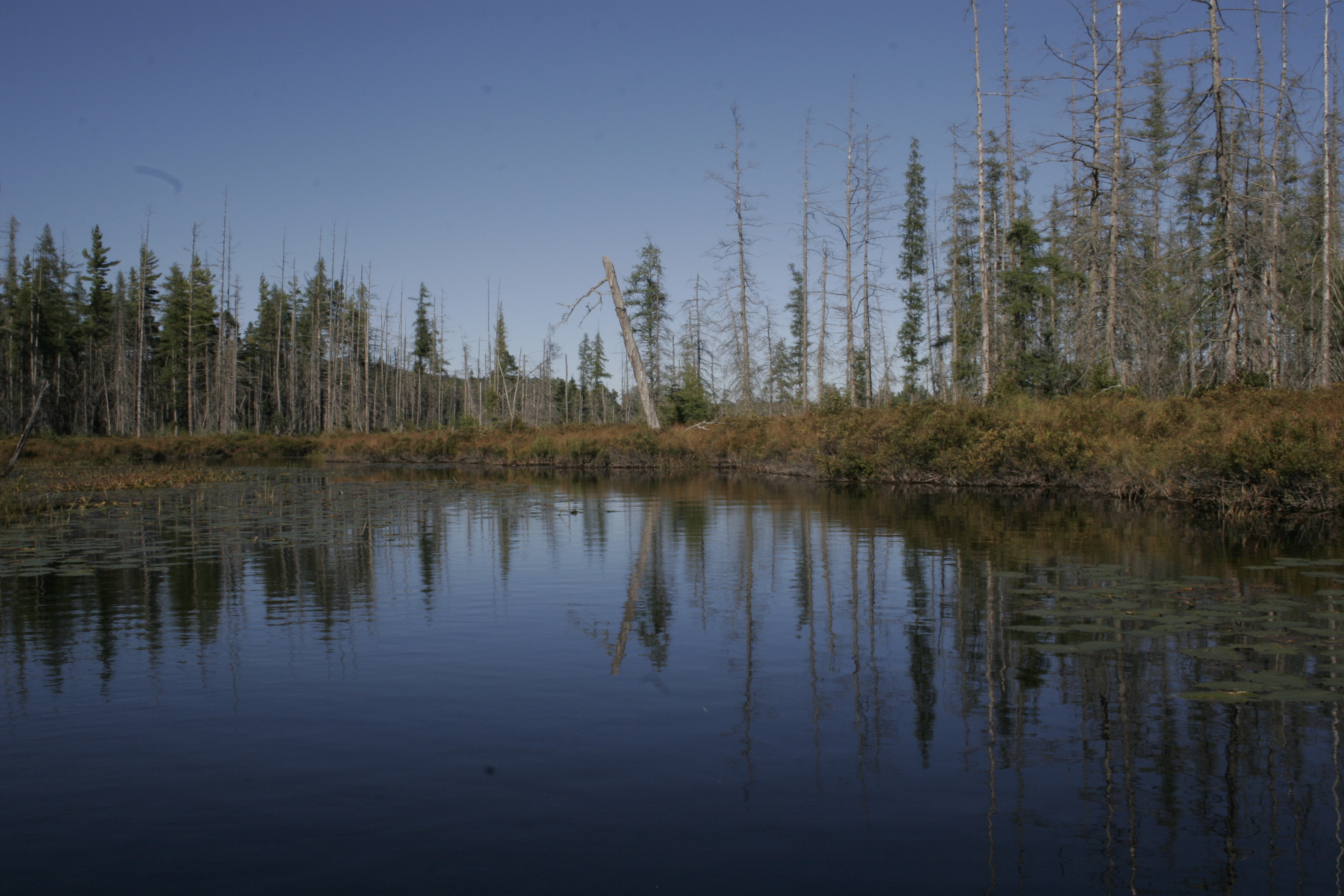 Rejuvenated Ad'k lake gets first stocking in 30 years |