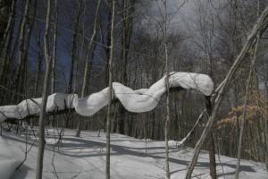Snow snake