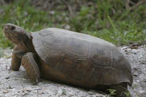 _MG_3494_turtle